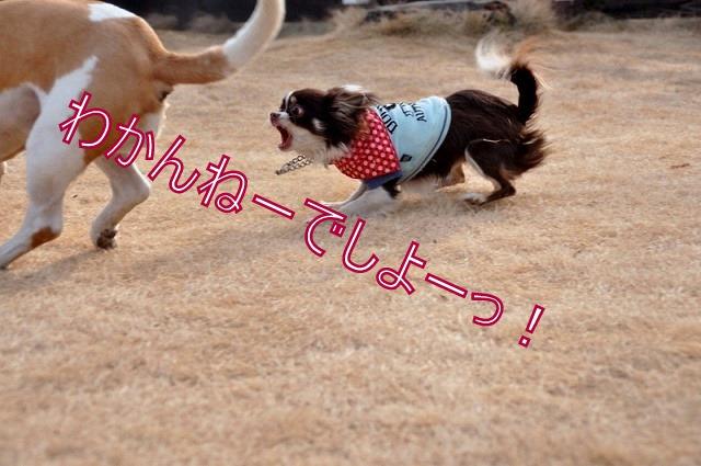 30_20110126193241.jpg