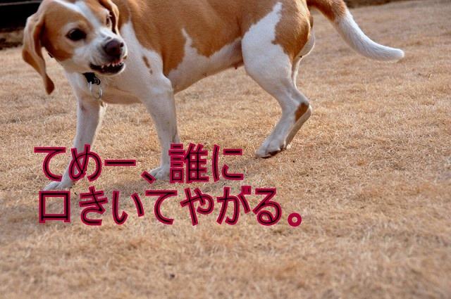 31_20110126193423.jpg