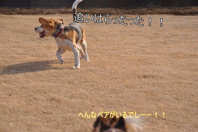 31_20110128131344.jpg