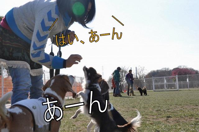 31_20110203233920.jpg