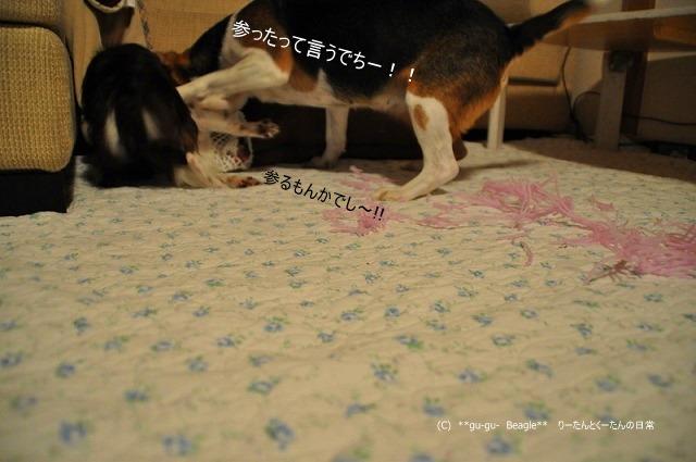 32_20100603132407.jpg