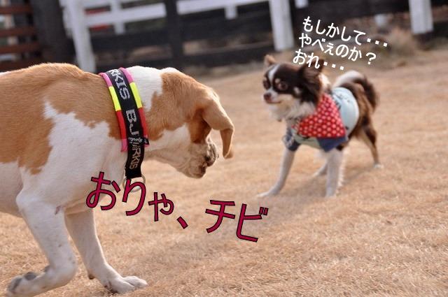 32_20110126193423.jpg