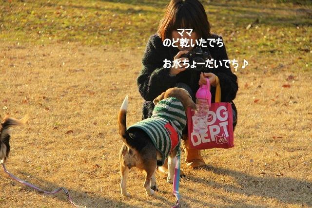 35_20110110112316.jpg
