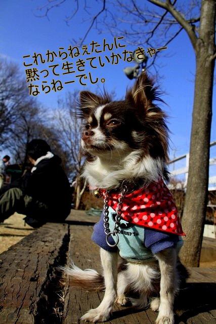 36_20110126193423.jpg