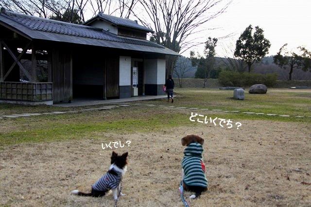38_20110110112602.jpg