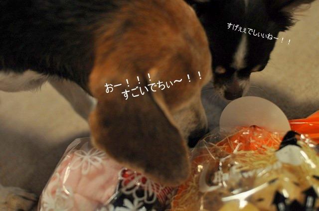 3_20101101224117.jpg