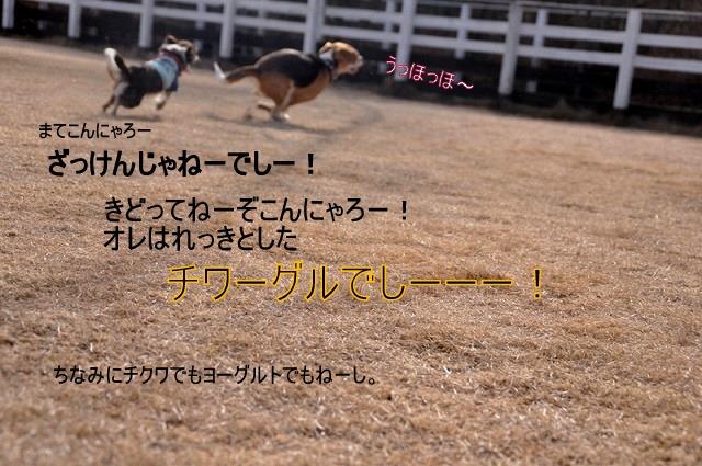 3_20110126190227.jpg