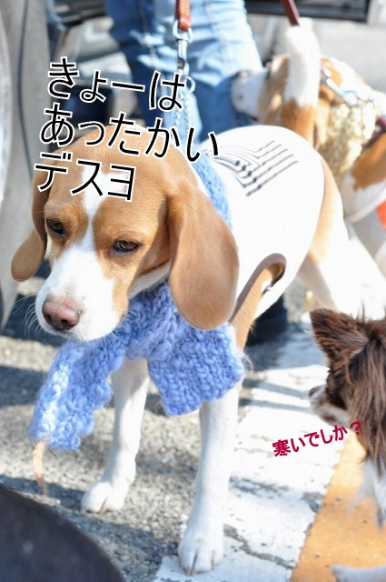 3_20110203231940.jpg