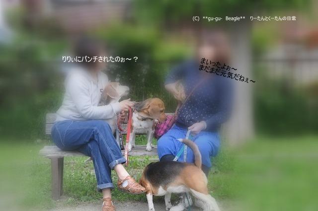 40_20100516222454.jpg