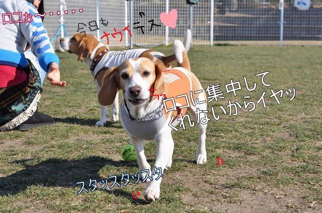 44_20110206091509.jpg