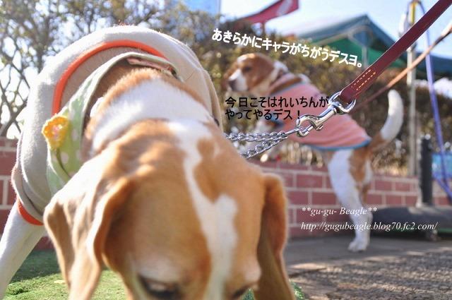 4_20110121163841.jpg
