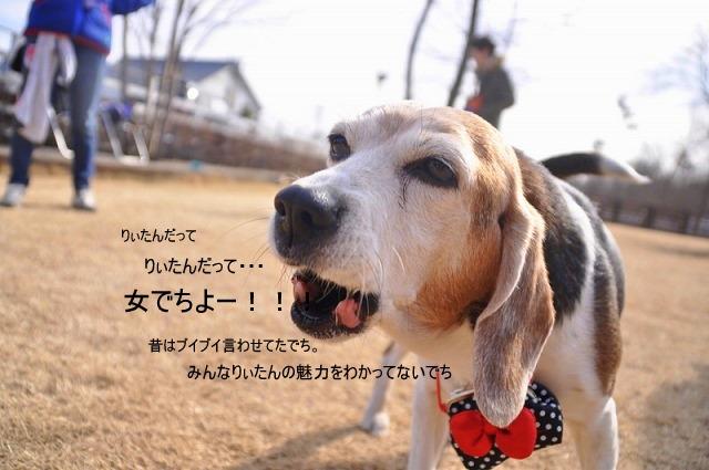 4_20110125160505.jpg