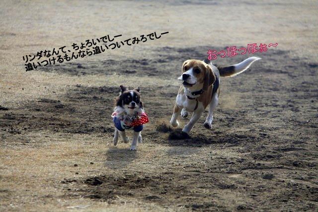 4_20110126190227.jpg
