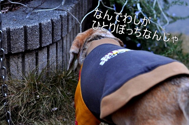 4_20110201223308.jpg