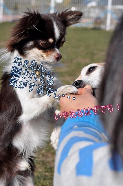 56_20110206094438.jpg