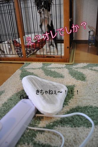 5_20100424105232.jpg