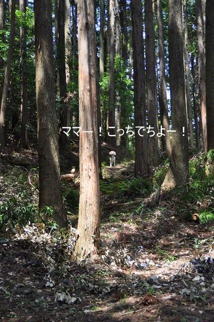 5_20100508224247.jpg