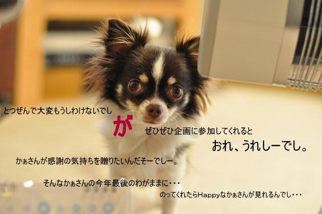 5_20101225180506.jpg