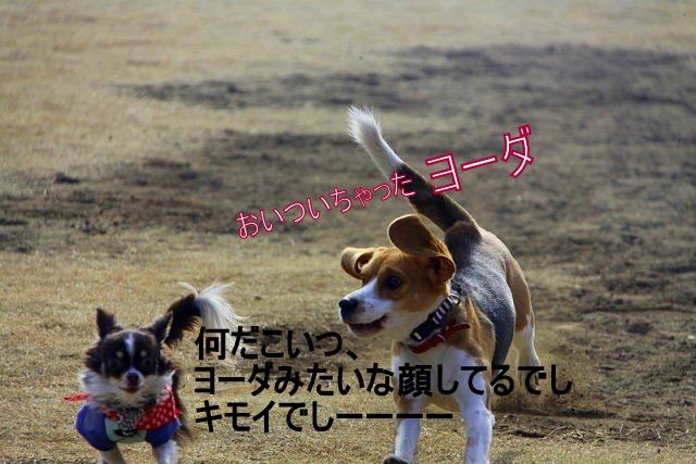 5_20110126190227.jpg