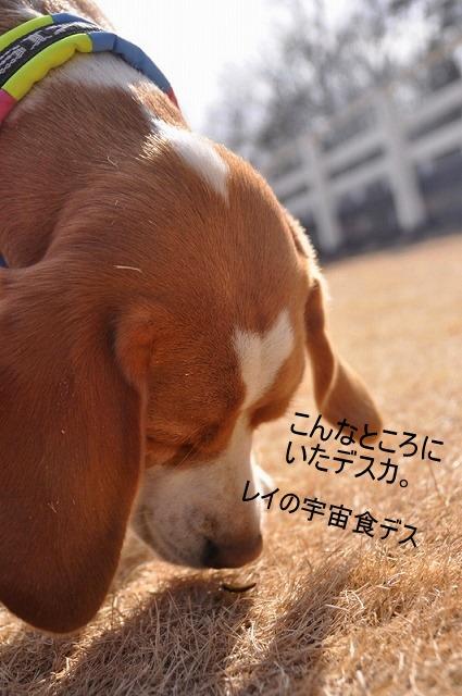 5_20110128130056.jpg