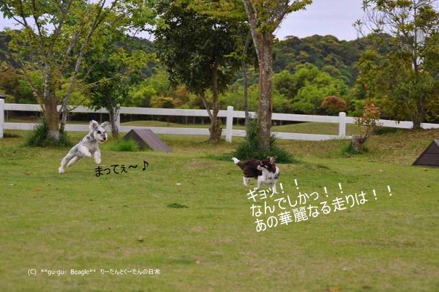 6_20100514163504.jpg