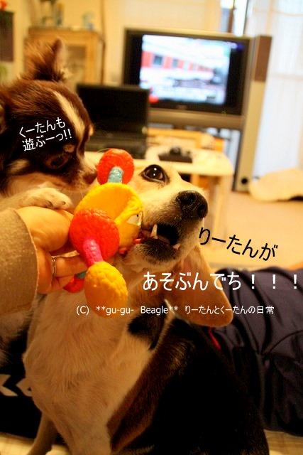 6_20100526163223.jpg