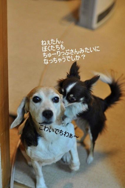 6_20110114165545.jpg