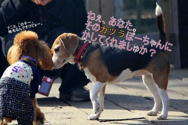6_20110127214131.jpg