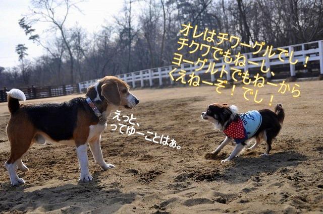 7_20110126191226.jpg