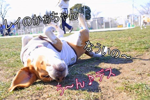 7_20110203232723.jpg