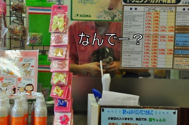 7_20110211083433.jpg