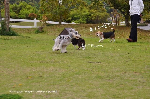 8_20100514163619.jpg