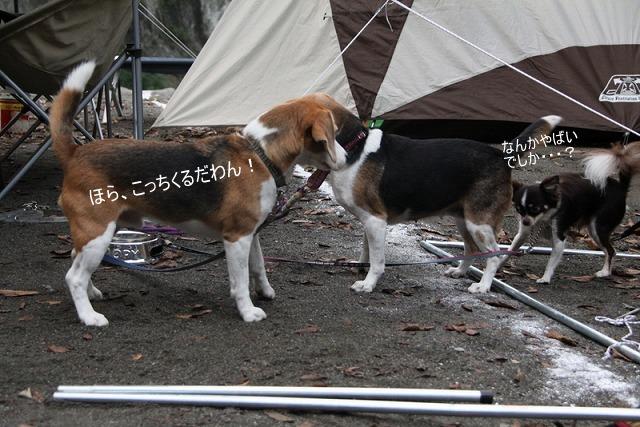 8_20100921161851.jpg