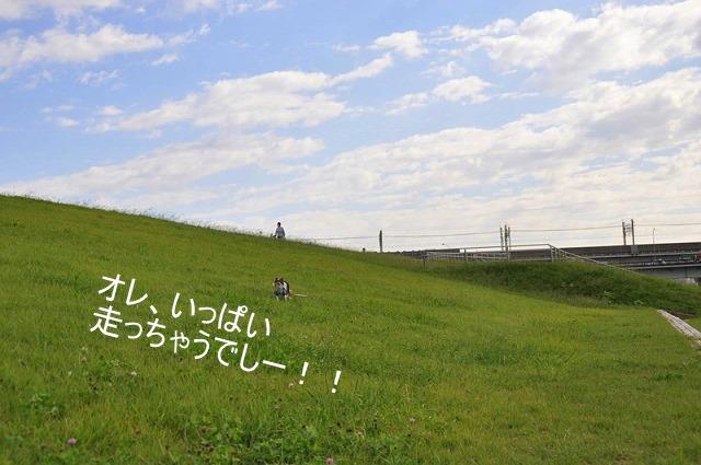 8_20100930112916.jpg