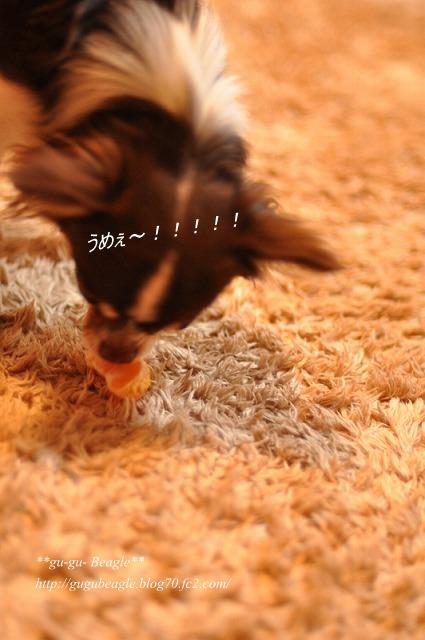 8_20101202081433.jpg