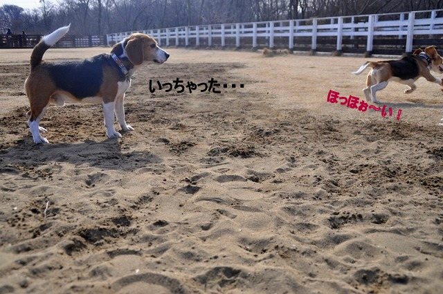 9_20110126191225.jpg