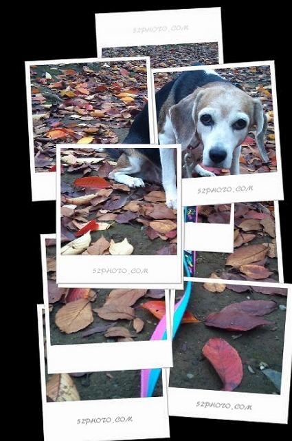 C360_2010-11-22_09-56-50.jpg