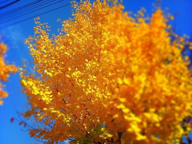 C360_2010-11-24_13-45-22.jpg