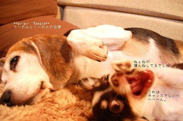 DSC_0102_20100224105005.jpg