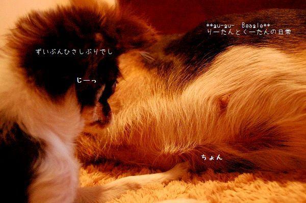 DSC_0150_20100120123531.jpg