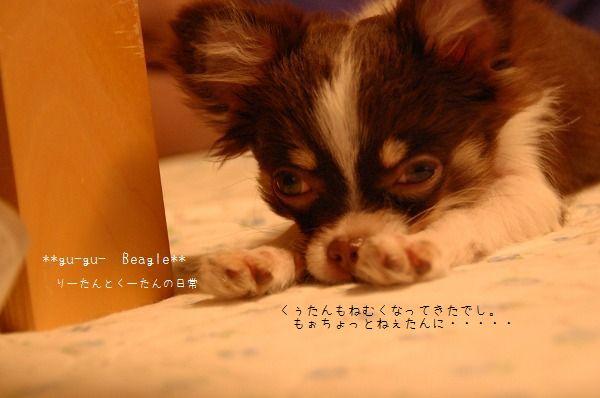 DSC_0295_20100104153206.jpg