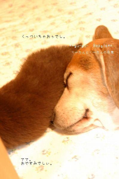 DSC_0300_20100104153339.jpg