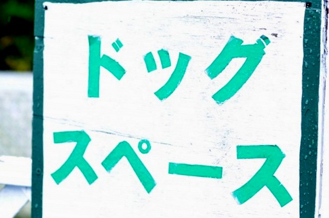 DSC_0305_20101012095610.jpg