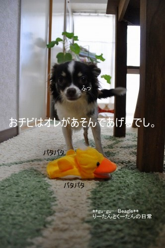 DSC_0378_20100419124055.jpg