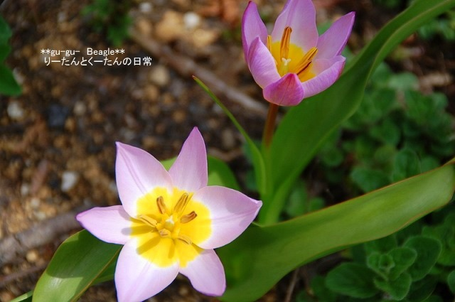 DSC_0519_20100413230157.jpg
