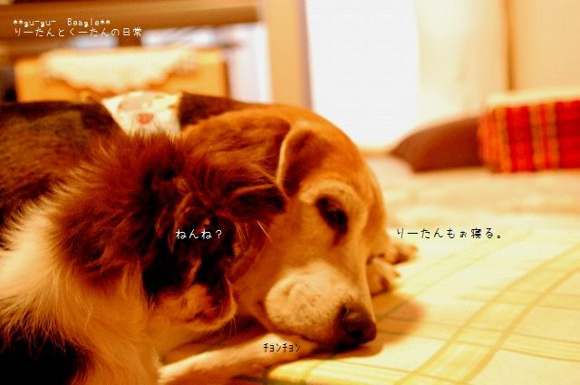 DSC_0991_20100206103033.jpg