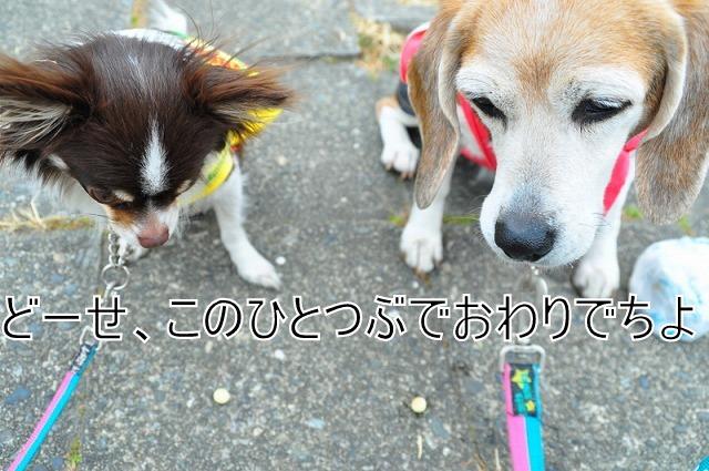 DSC_1608_20110210192606.jpg