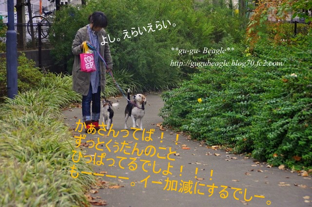 DSC_2828_20101115140325.jpg