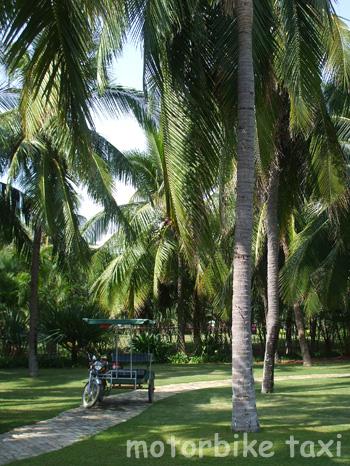 椰子の木がたくさんの島