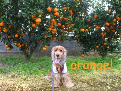 オレンジゾ~ン☆
